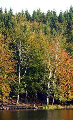 Gatunki drzew